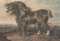 Print, colour mezzotint, Warwick, cart horse belonging to Messrs Curtiss, Basinsgtoke, Hampshire, published by D Wolstenholme, 22 Chads Row, Grays Inn Road, London, 1831.