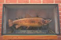 Taxidermy, fish mounted in a display case, brown trout, Salmo trutta fario, caught by A E Hasler in the River Itchen, Durngate Mill, Water Lane, Winchester, and prepared by William Chalkley, The Square, Winchester, Hampshire, 1910