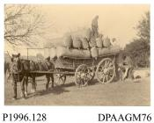 Photograph, sepia, showing men loading hops onto horse drawn wagon, Will Hall Farm, Alton, Hampshire, 1890s