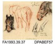 Drawing, charcoal and pastel drawing in brown and black, mounted within a glazed wooden frame, sketches of horse parts, drawn by William Grant, Havant, Hampshire, 27th October 1915