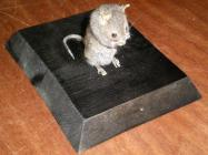 Mammal, mounted uncased, Mus musculus, house mouse, 1 specimen, found 6 Garden Avenue, Portsmouth, Hampshire. PO6 2NG, July 2005