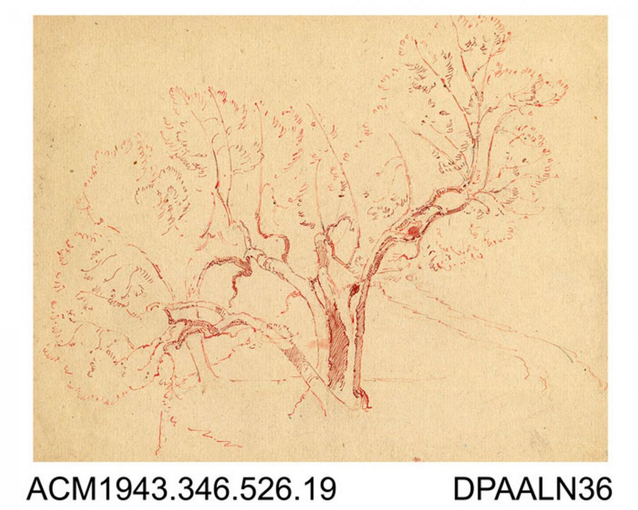 Drawing Pen And Ink Drawing In Red On Paper Tree Sketch Drawn By William Herbert Allen Of Farnham Surrey 1880s 1940s