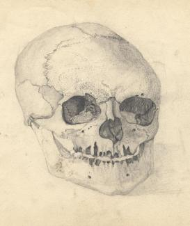 Drawing, pencil drawing, a skull, probably by Elizabeth M Baker, art student, Andover, Hampshire, about 1863.