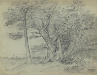 Drawing, pencil drawing, woodland scene, probably by Elizabeth M Baker, art student, Andover, Hampshire, about 1863.