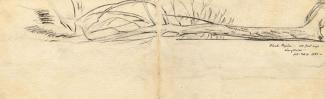 Drawing, pen, fallen black poplar, Populus nigra subsp betulafolia, Langdown House, Langdown, Hythe and Dibden, Hampshire, drawn by Louise C Hobart, 1866. The drawing extends across two facing pages in the sketch book.