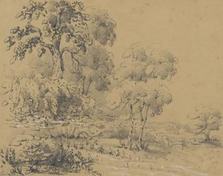 Drawing, pencil drawing, trees and flowers at Silchester, Hampshire, mid 19th century?